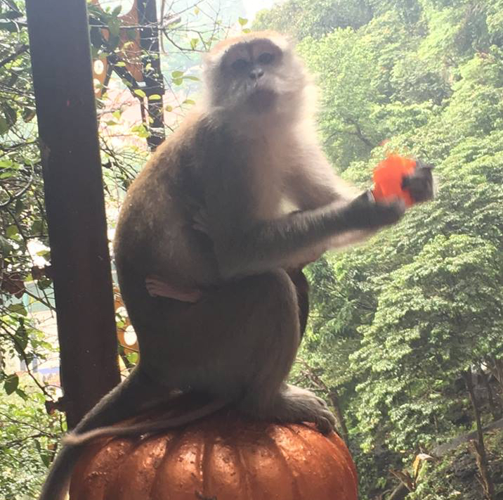 Monkey at Batu Cabes